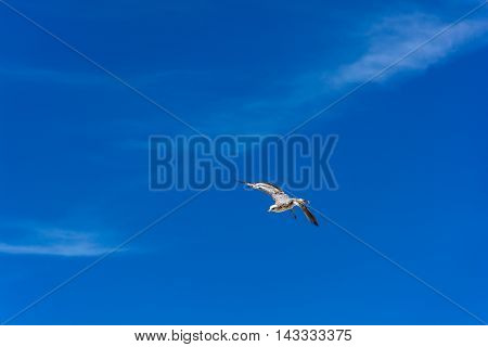 Bird Fly in The Blue Sky with Cloud