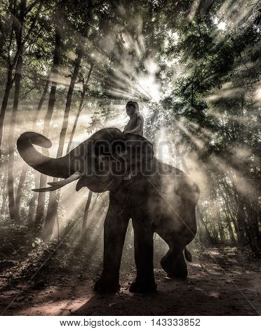 Emotion of the elephant with the mahout