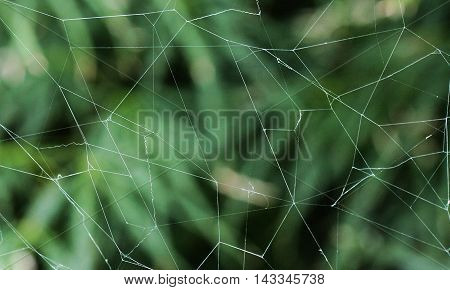 Photograph of spiderweb against a background of a bush.