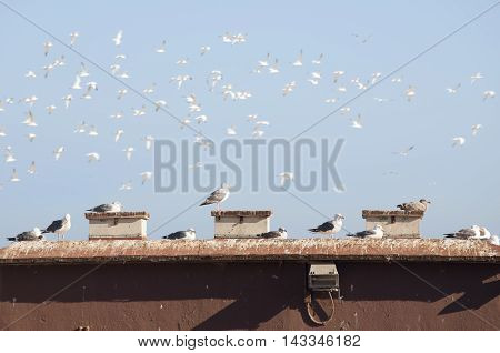 Seagulls sitting on the roof and flying