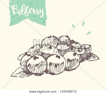 Sketch of a bilberry, vector illustration, hand drawn