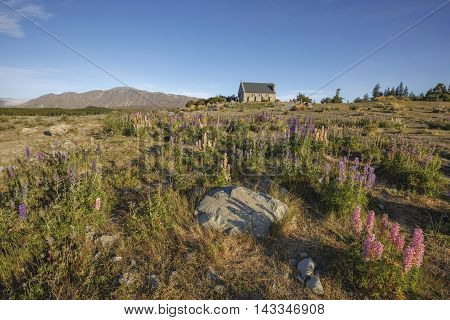 Church of the Good Shepherd with Lupin flowers in foreground, Lake Tekapo, New Zealand