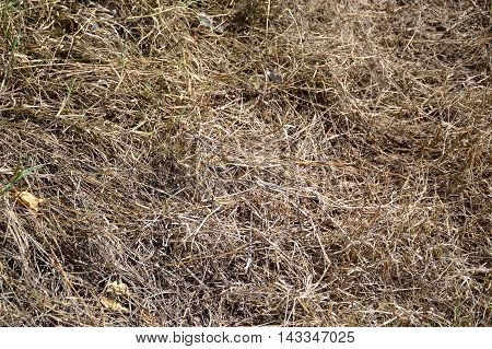 close up dry grass on the ground