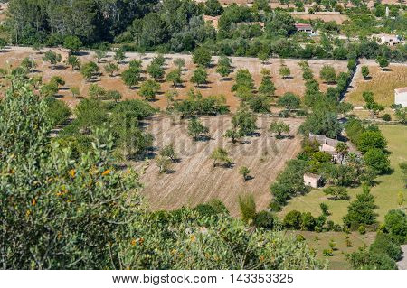 Great nice Agricultural land in Mallorca Spain