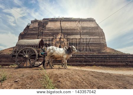 Burmese rural man driving wooden cart with traditional village life in Burma countryside