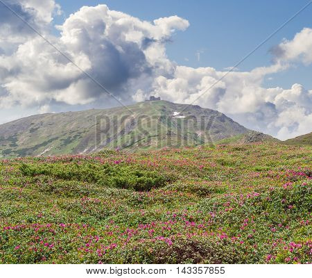 Alpine meadow with rhododendrons against the background of a sloping mountain peak with the ruins of the old observatory and sky with clouds