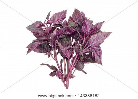 Bundle of twigs of a fresh purple basil on a light background