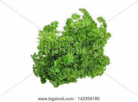 Bundle of fresh green curly leaf parsley on a light background