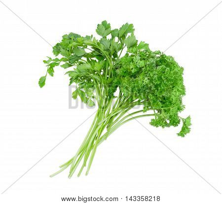 Bundle of fresh green curly leaf parsley and flat leaf parsley on a light background