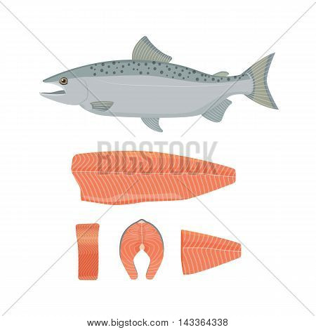 Salmon fish vector illustration. Raw fish, slice, steak, fillet. Flat style.