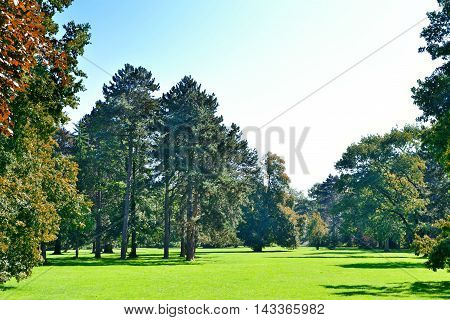 Autumn scene with green meadow and autumn forest in a park. Idyllic landscape.