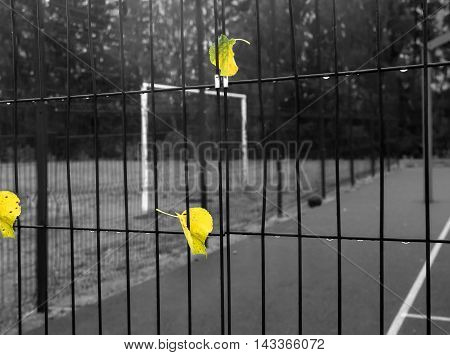 Autumn leaves and water drops on the steel guard fence in focus and sport playground in the blurred background. Selective color shot
