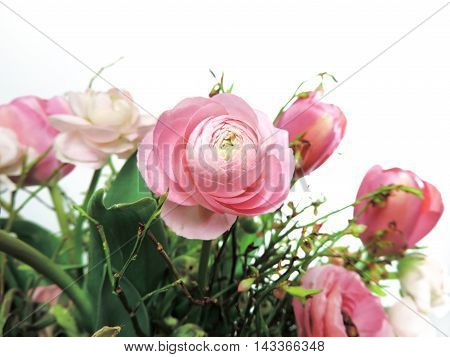 Peony or buttercup flower bouquet. Pink peonies and tulips, isolated on white background.