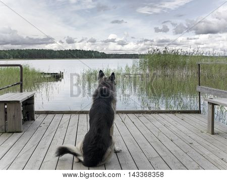 A lonely shepherd dog sitting on the jetty. Outdoor filtered shot concept of dog devotion