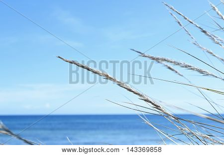 Sea scene with reeds and blue sky