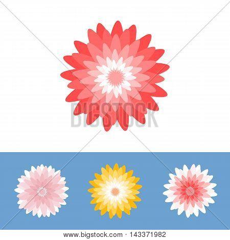 Vector flower, Chrysanthemum, gerber daisy, flat design