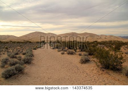 Kelso Dunes Trail in Mojave National Preserve, California