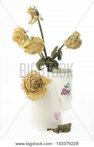 dried yellow rose flower at on background