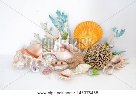 Colorful arrangement of sea shells and coral