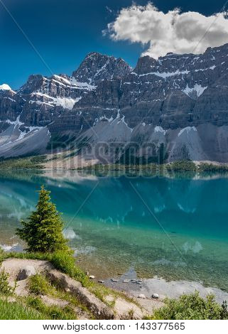 Lone Pine Tree Along the Shore of Bow Lake in the Canadian rockies