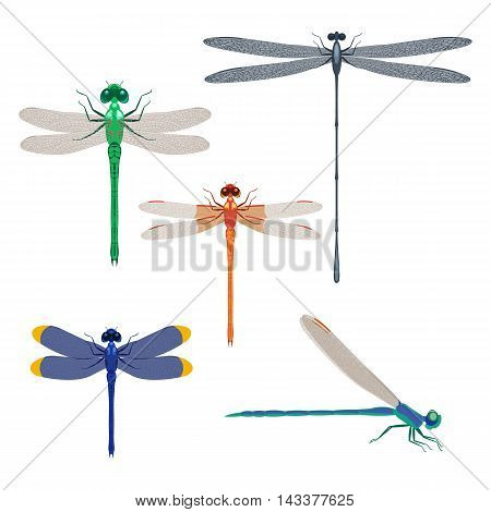 Dragonfly insects set vector illustration isolated on a white background
