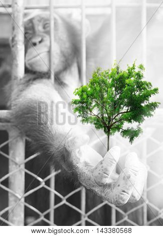 Creative Double Exposure,hands Of Chimpanzees With Green Trees