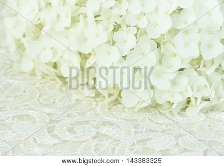 White hydrangea flowers on a lace background