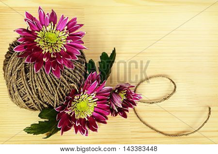 Chrysanthemum flowers and a rope on wooden background