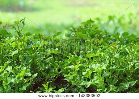 Vegetable garden. organic farming in the park