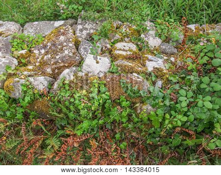 high angle shot of a overgrown low stone wall detail