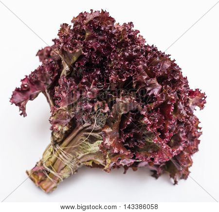 Bunch Of Fresh Leaf Lettuce Lollo Rosso On White