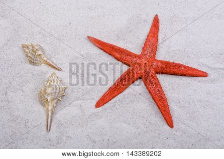 Red starfishes and one shell on a greay sand