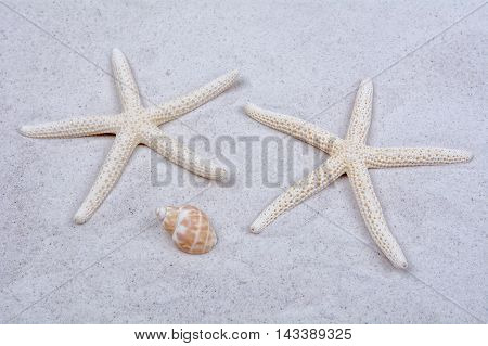 White starfishes and one shell on a greay sand