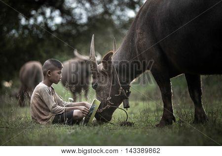 Boy reading book with him buffalo Thailand