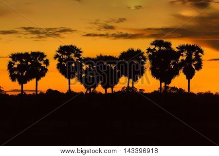 Palm trees and sunset of the sky,silhouette photo.