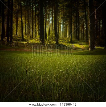 stunning picture with trees. trees are amazing. nature show a fairytale landscape that impresses. words no longer have meaning. a picture in a good resolution