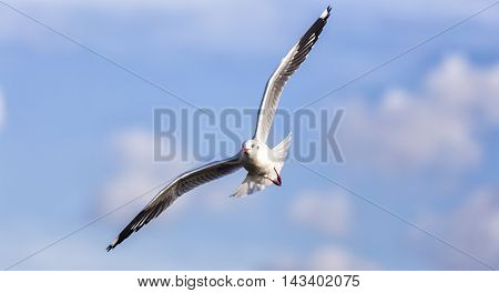Beautiful seagull in the bright blue sky