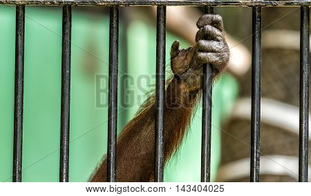 Monkey hand animal out from the cage of zoo