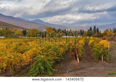 Mountain landscape with vineyards near Alushta city at fall season - Crimean peninsula