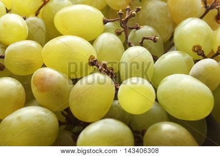 Tasty grapes for eating healthy and happy life