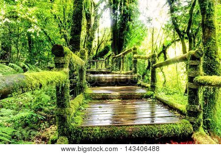 Moss around the wooden walkway in rain forestChiang Mai Province Thailand