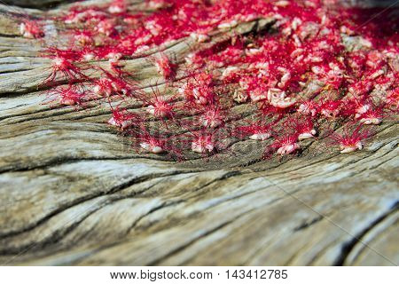 Red flowers on a wooden floor. Beautiful Background .