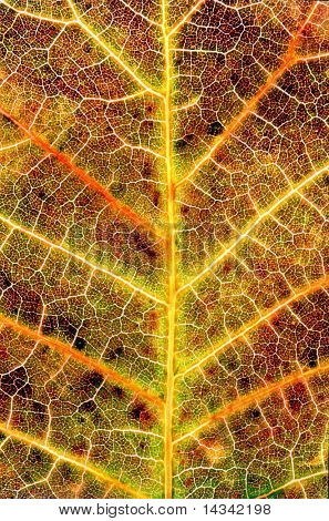 Close-up detail of an autumn leaf