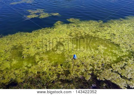 JOLIET, ILLINOIS / UNITED STATES - APRIL 16, 2016: A discarded aluminum soft drink can floats in the algae in a small lake in Joliet's Wesmere Country Club subdivision.