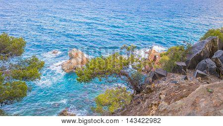 pine on the steep rocky clifie , Lloret de Mar, Costa Brava, Spain.