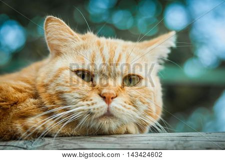 Domestic Cat In His Cage In The Garden Of A House