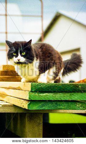 black and white cat resting on lumber