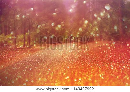 Dreamy forest bokeh background with blurry lights