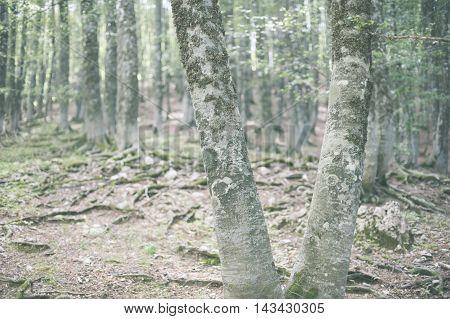Fascinating Winter Beech Tree Trunk In Woods