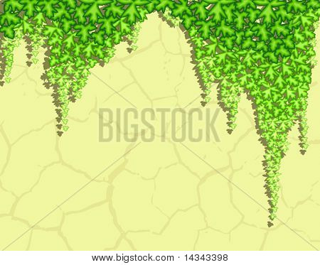 Editable vector illustration of ivy hanging down a wall with ivy, shadow and background as separate objects